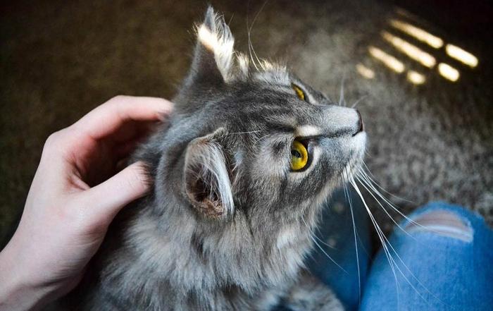 Vad ska man tänka på när man skaffar katt?