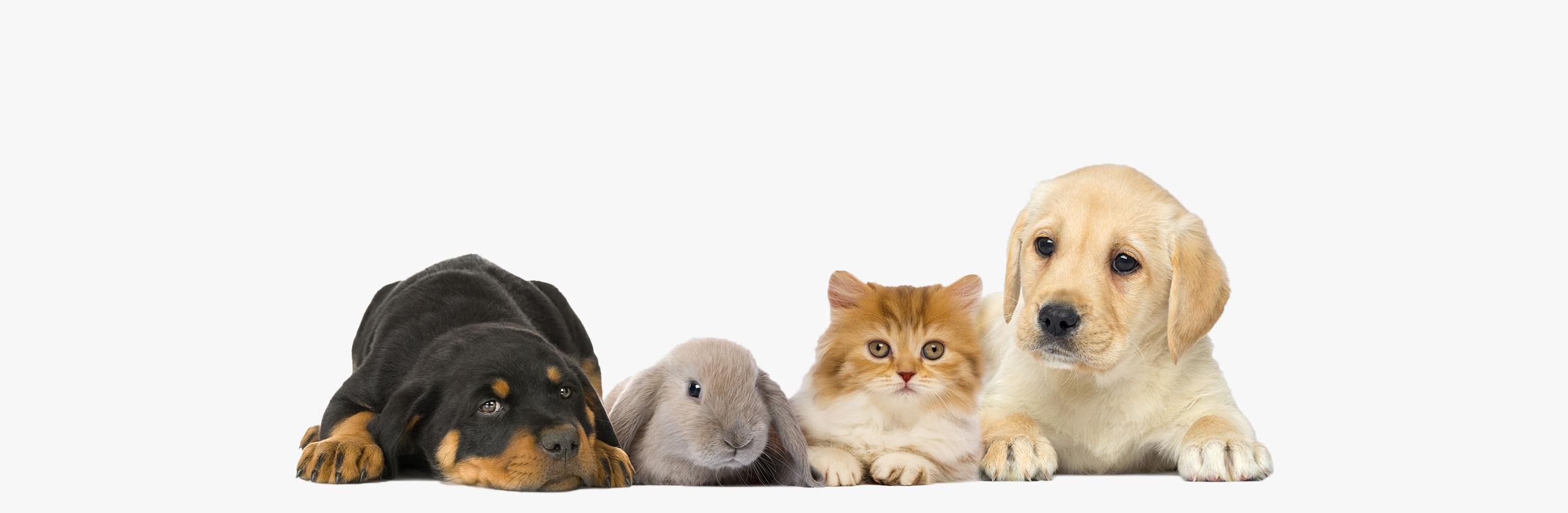 Lupus katter och hundar