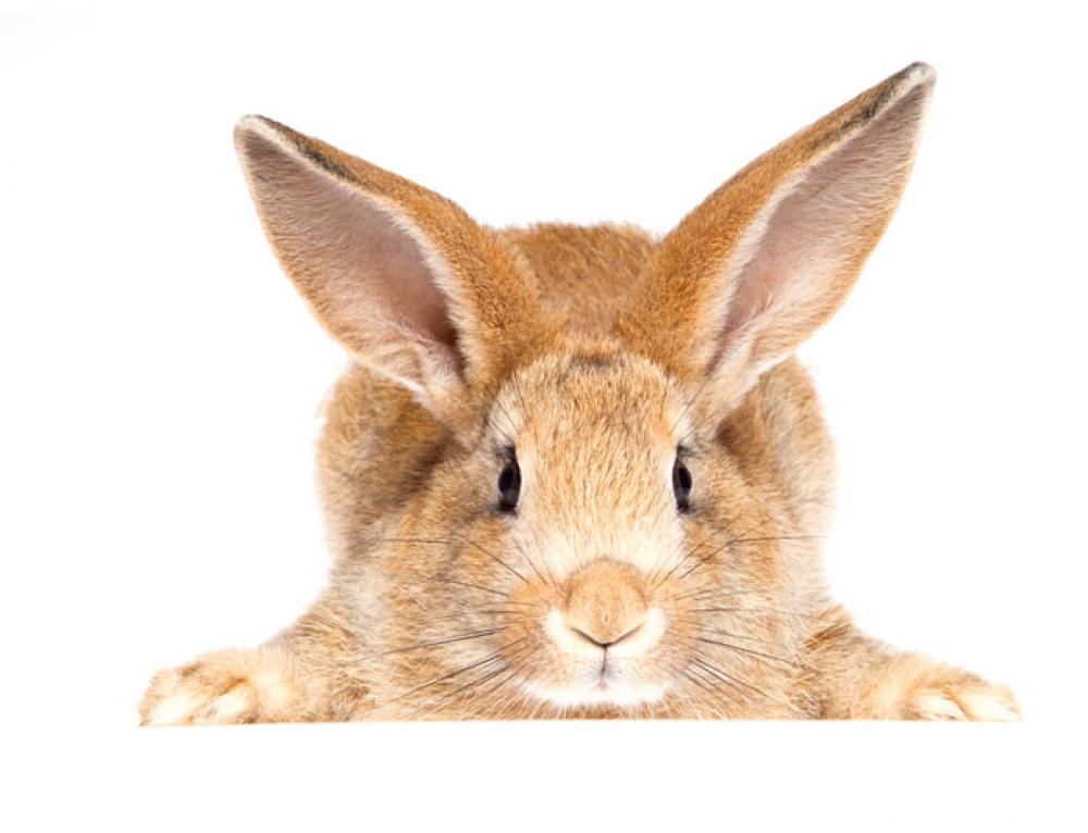 Ett bra kaninliv