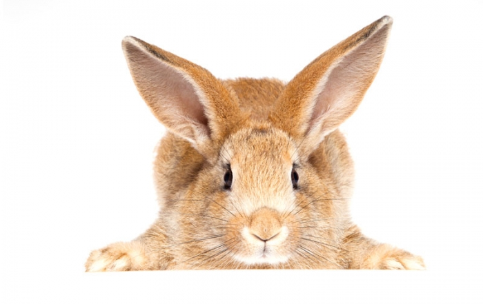 fiber innehåll mat kanin